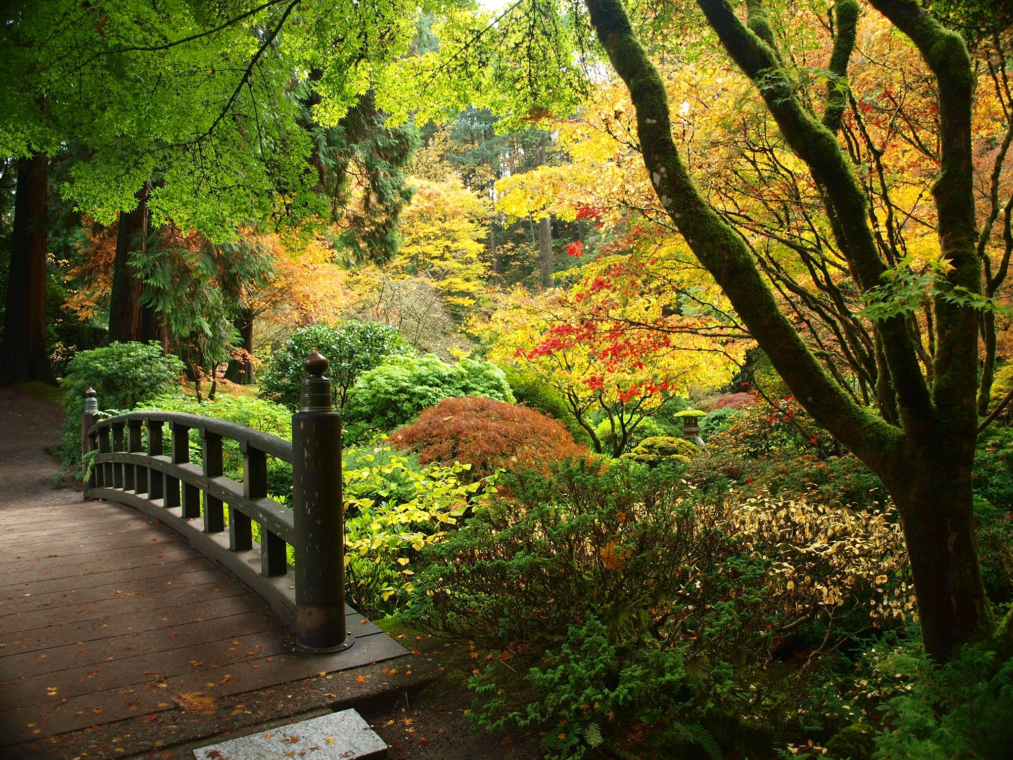 Fall colors at the portland japanese garden portland by bus for Japanese garden colors